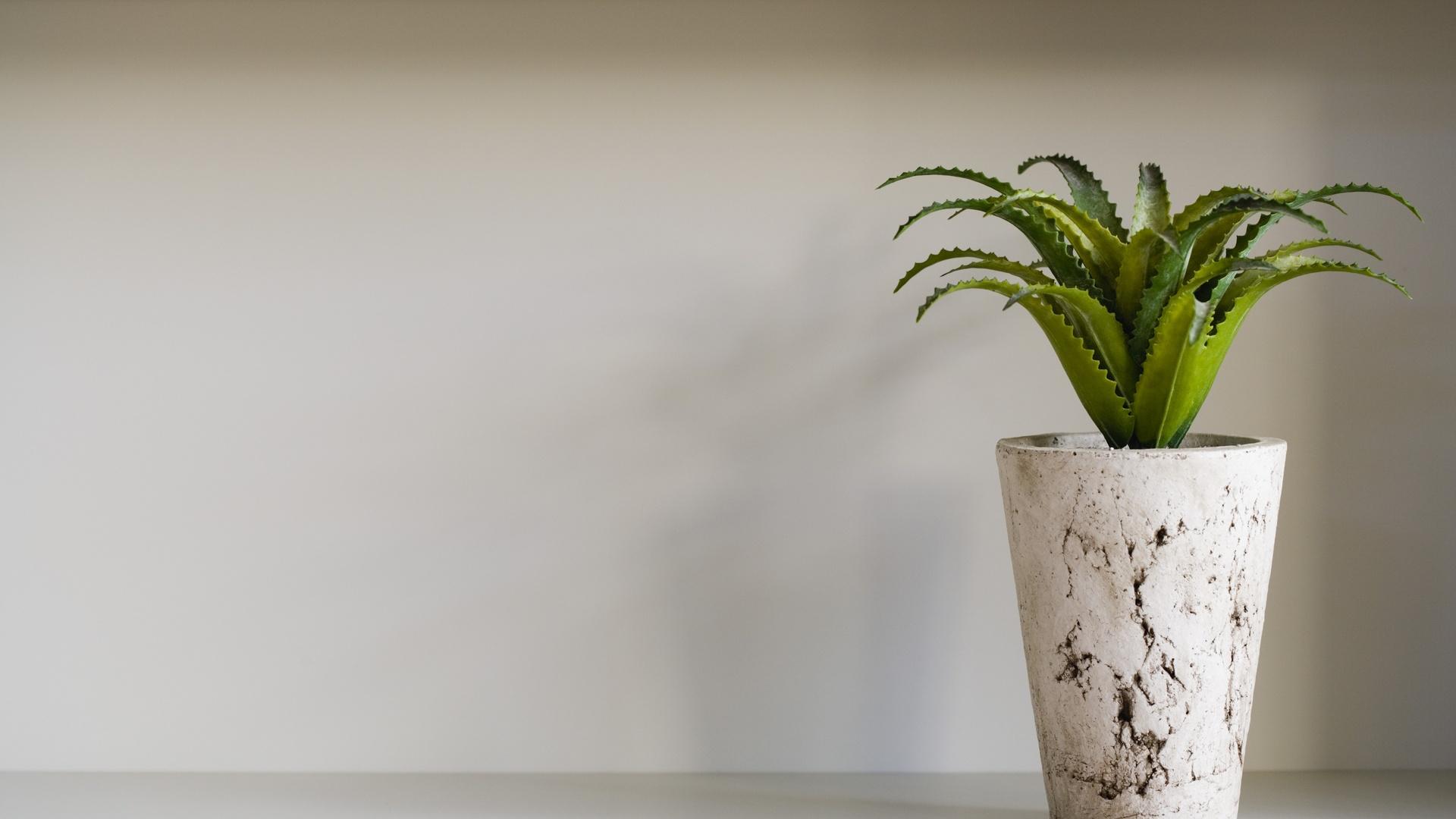 Houseplants free pic