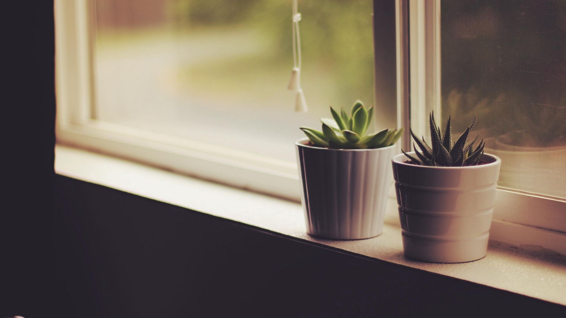 Houseplants free background