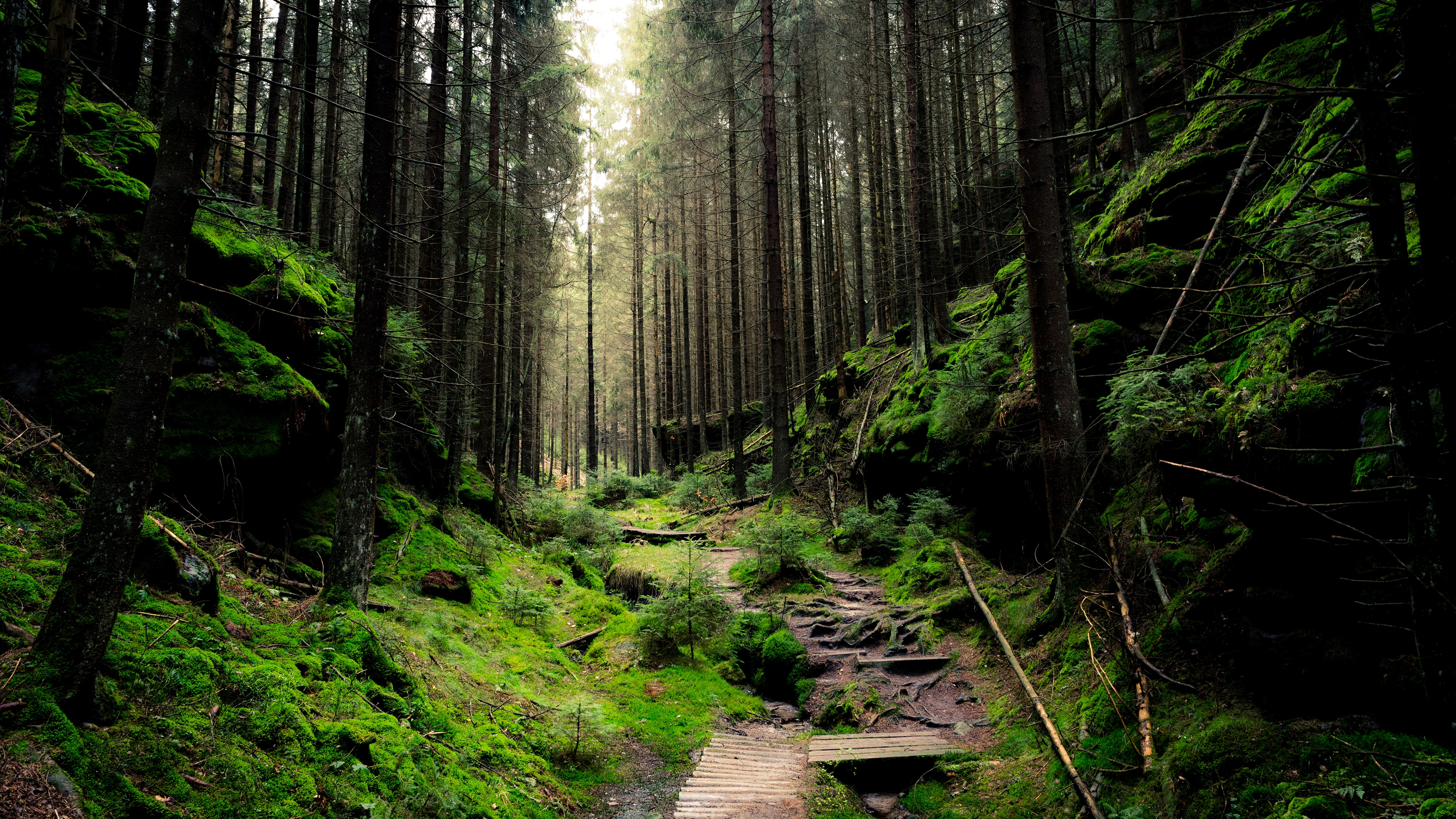 Forest 3840x2160 wallpaper