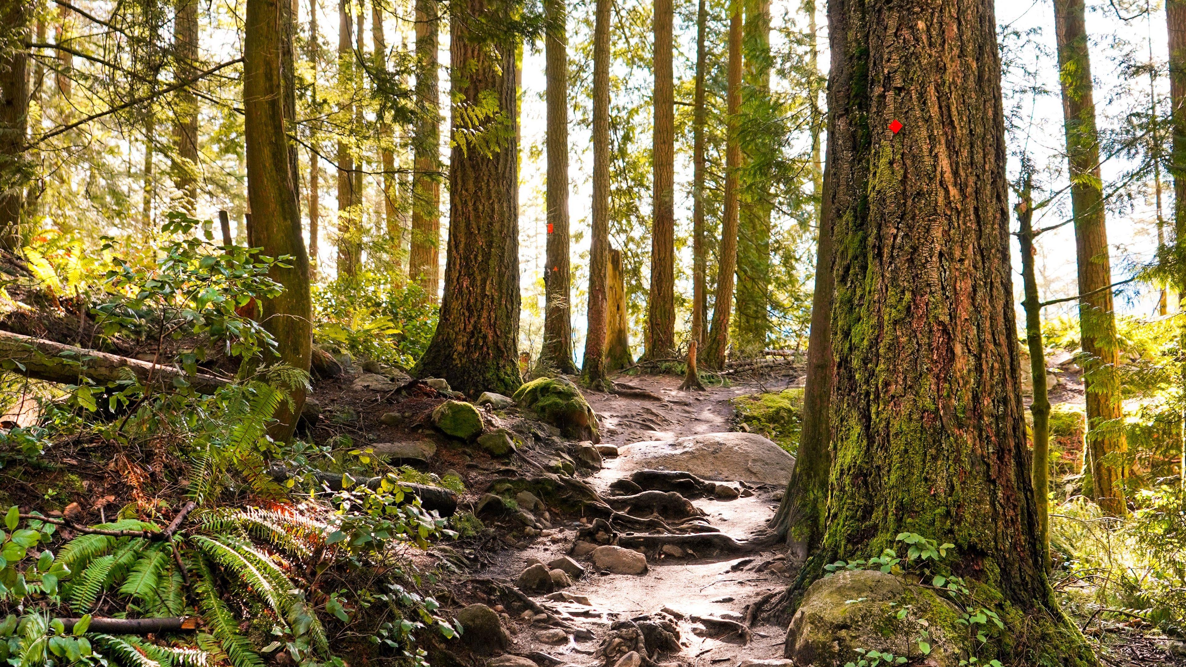 Forest desktop wallpaper free download