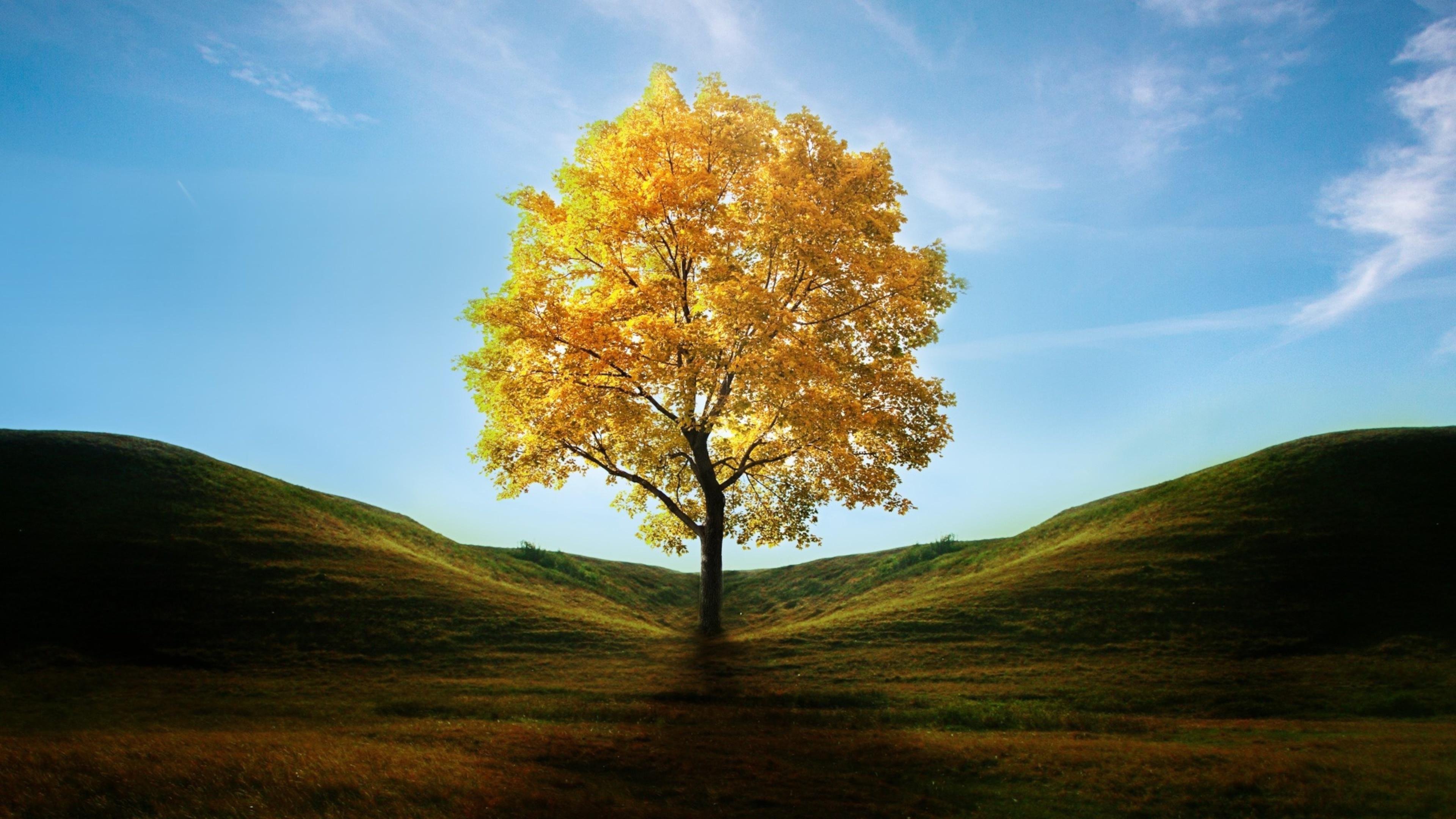 Fall free image