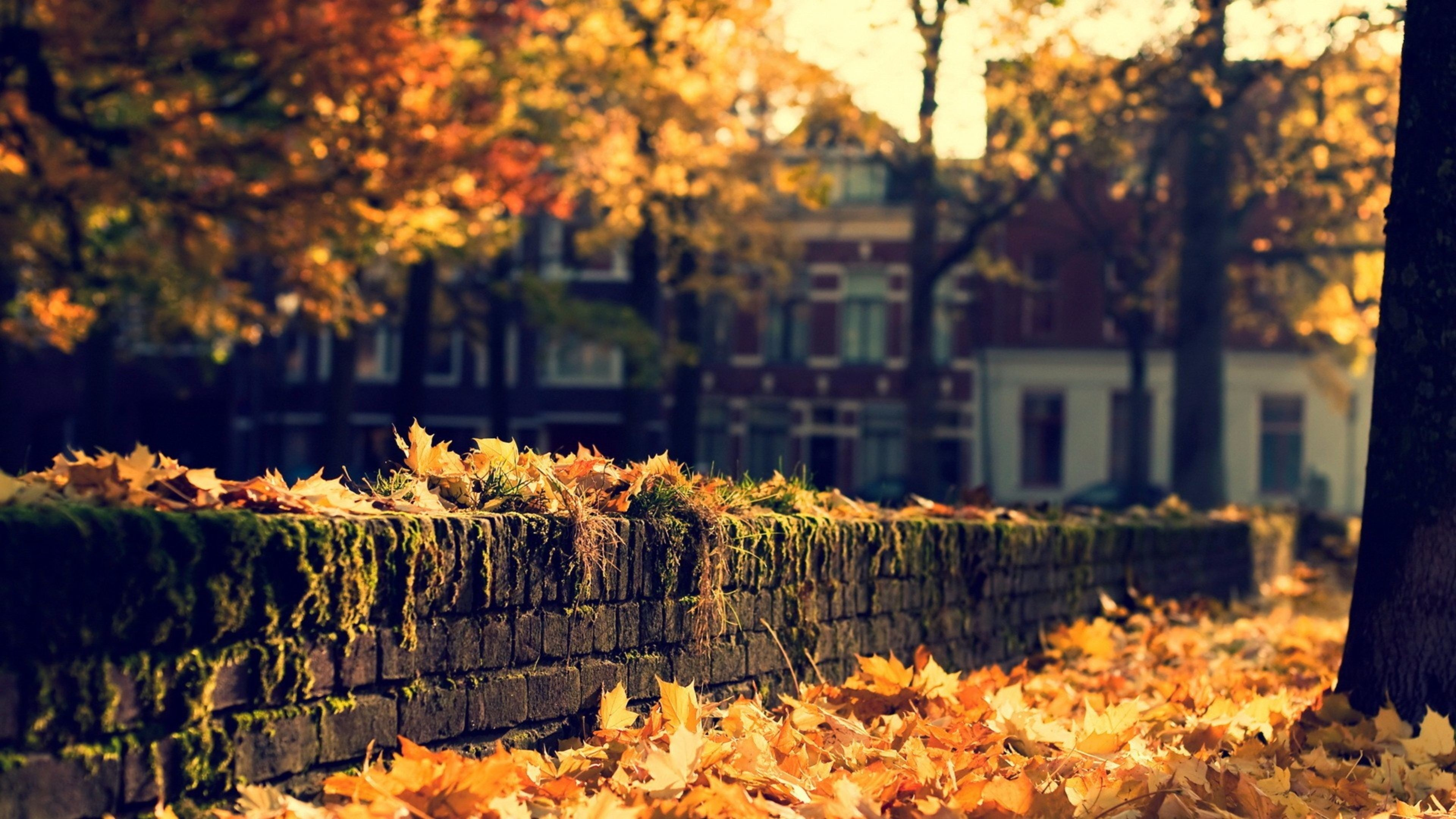 Fall best background