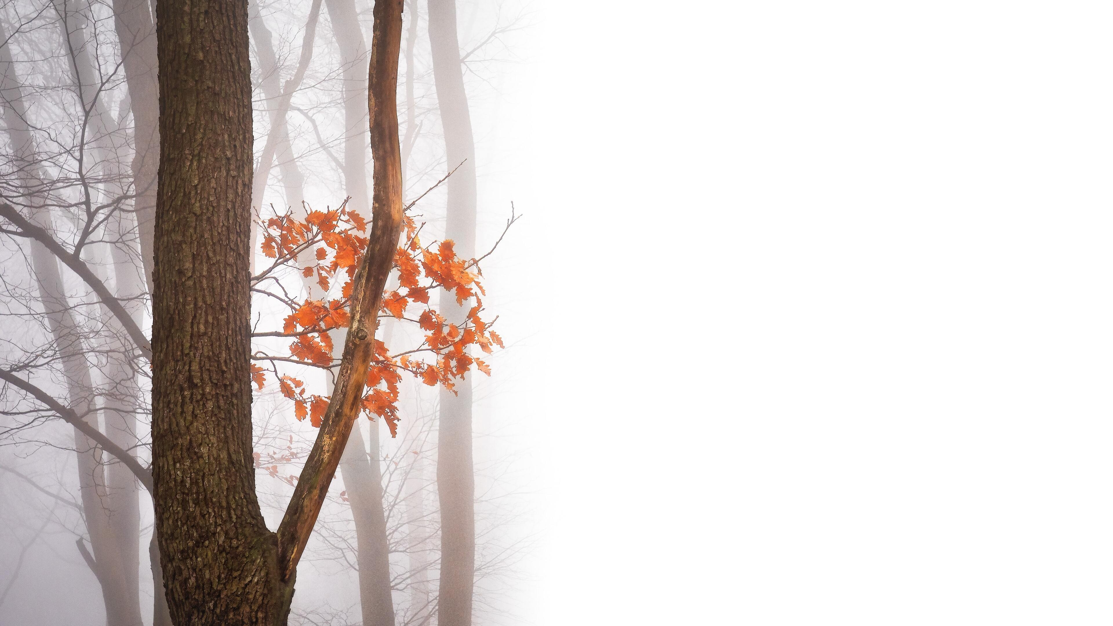 Fall free background