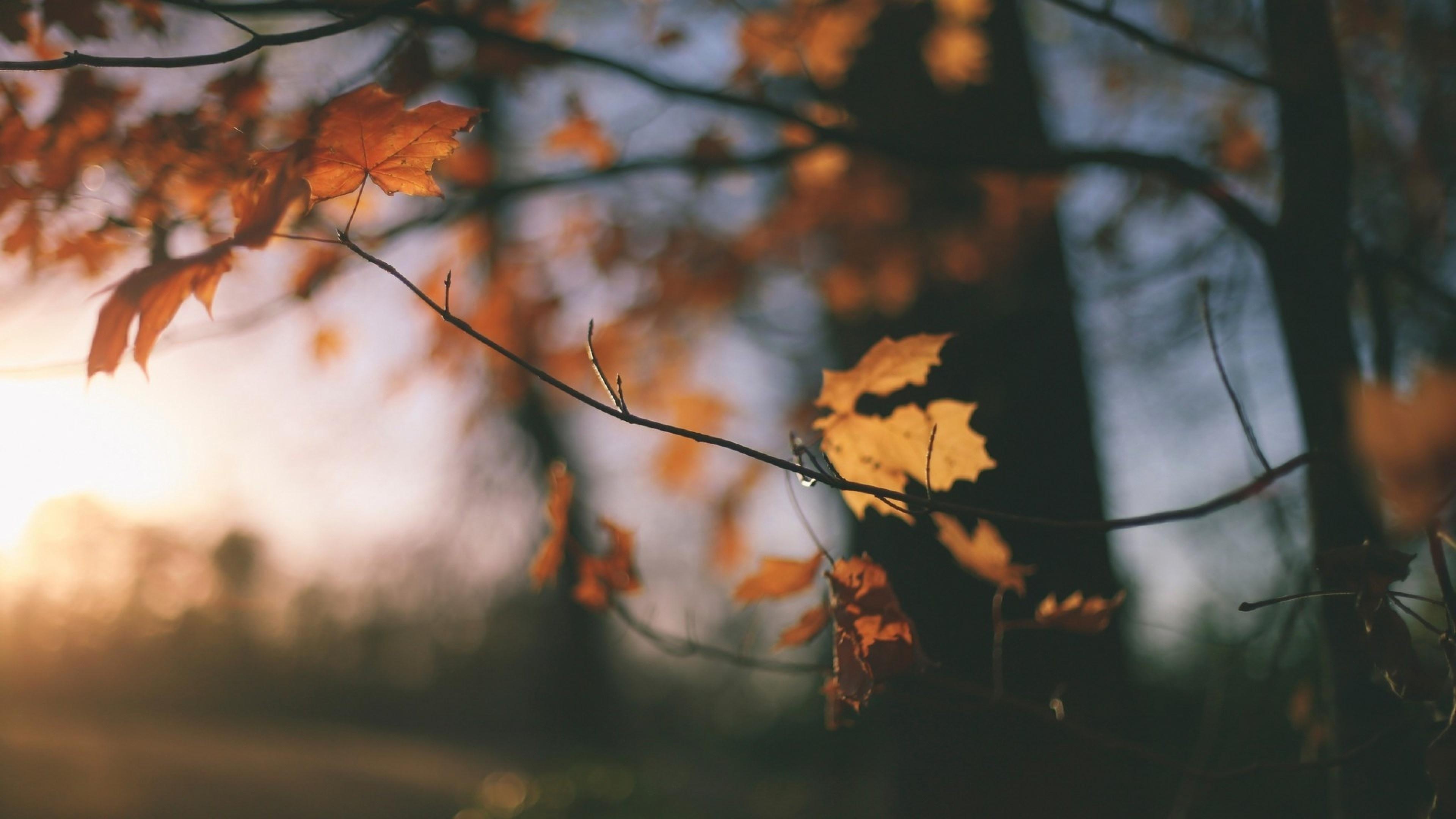 Fall 1080p wallpaper