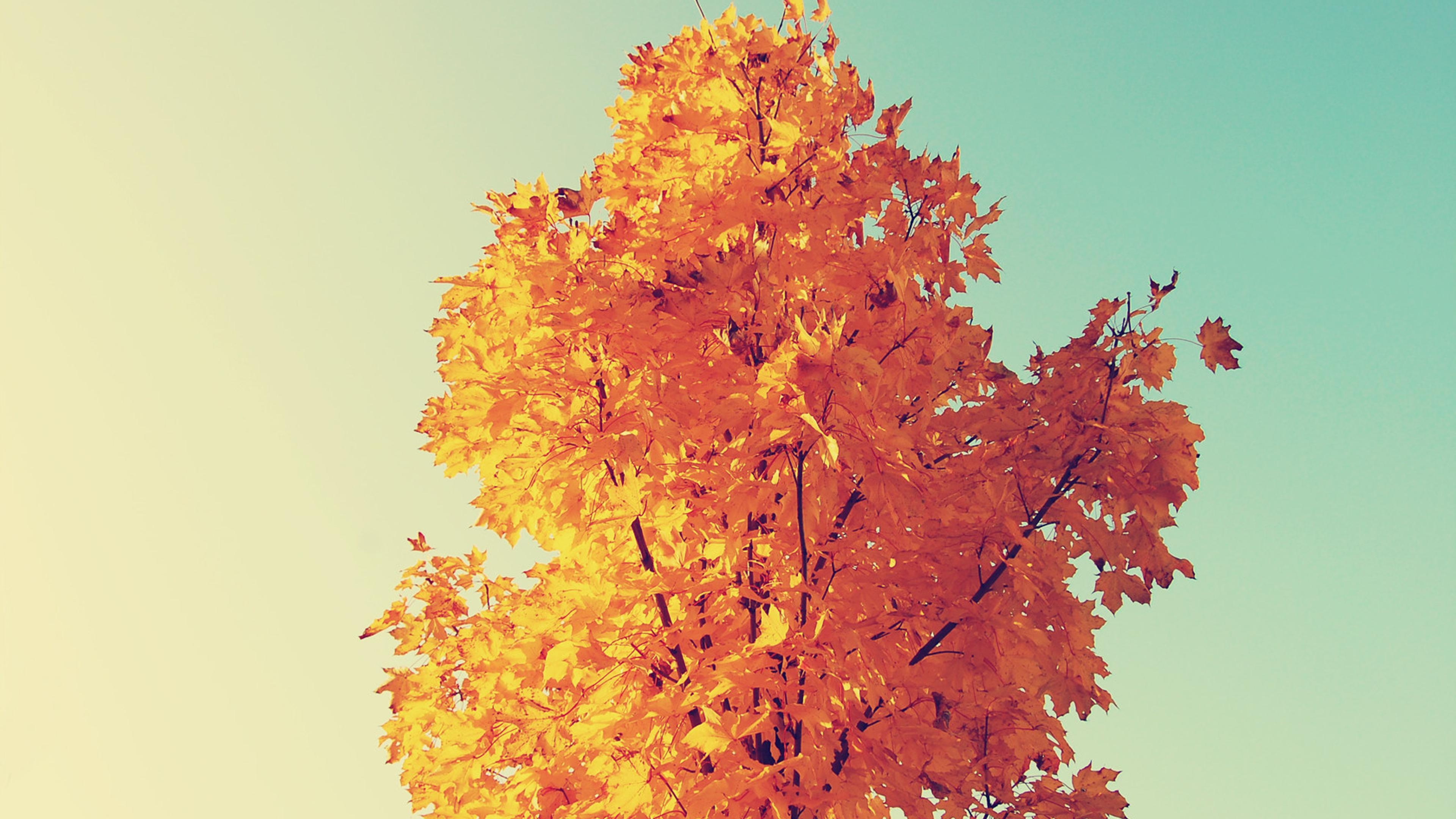 Fall cool background