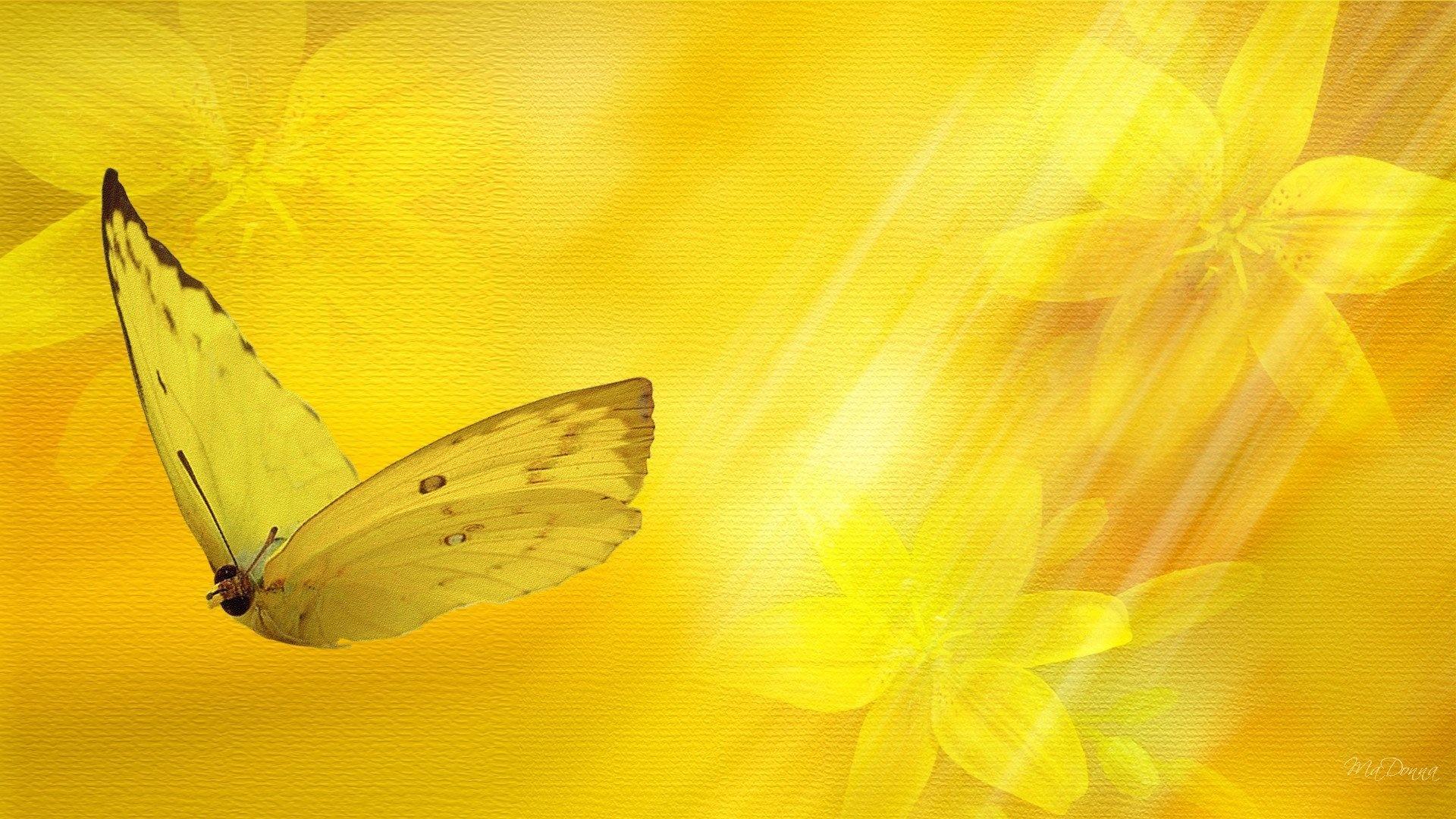 Butterfly desktop wallpaper free download