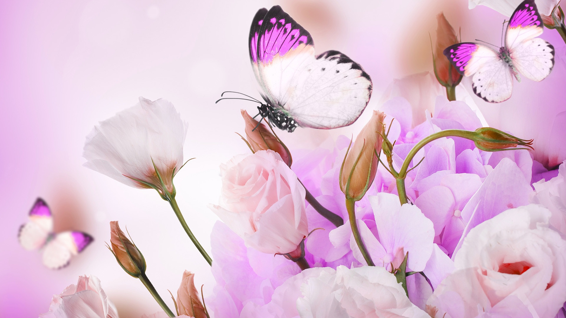 Bouquet Of Pink Roses And Butterfly, Floral Background 1920x1080 wallpaper