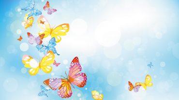 Butterfly cool wallpaper