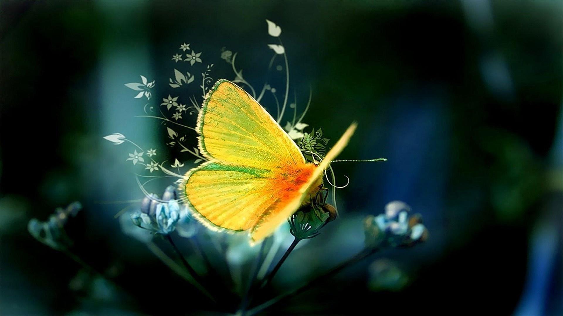 Butterfly 1080p wallpaper