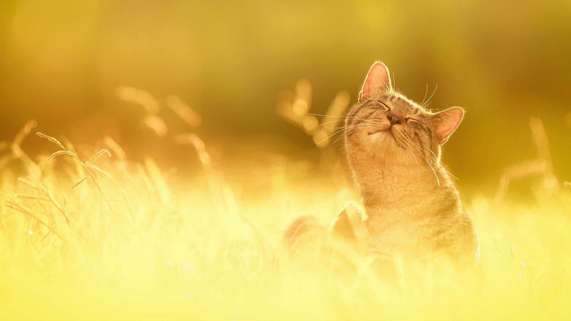 Cat desktop background