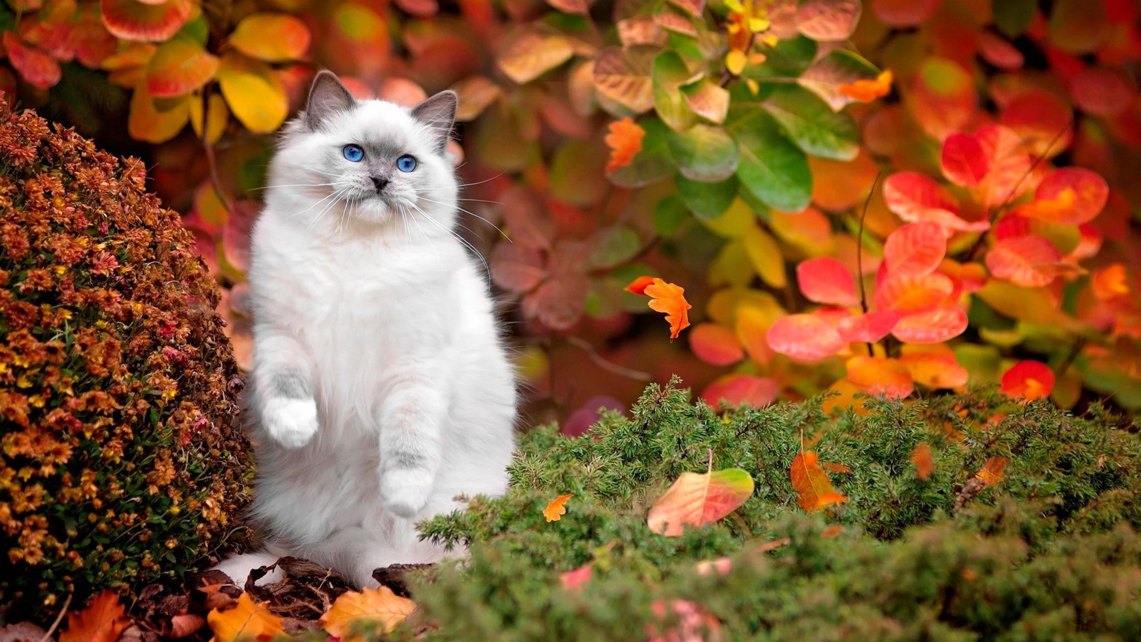 Cat best background