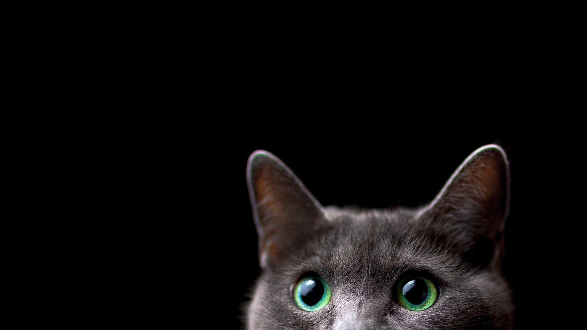 Cat cool background