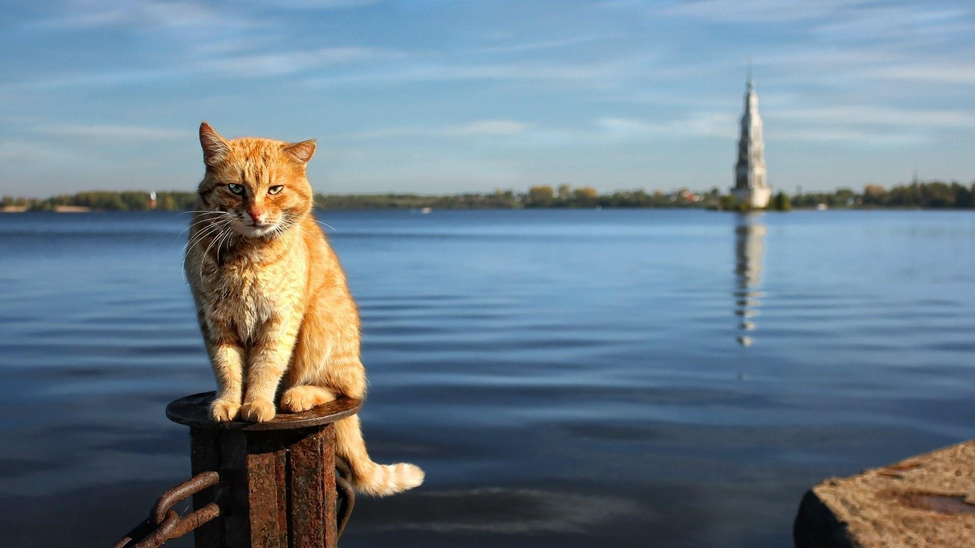 Cat hd background