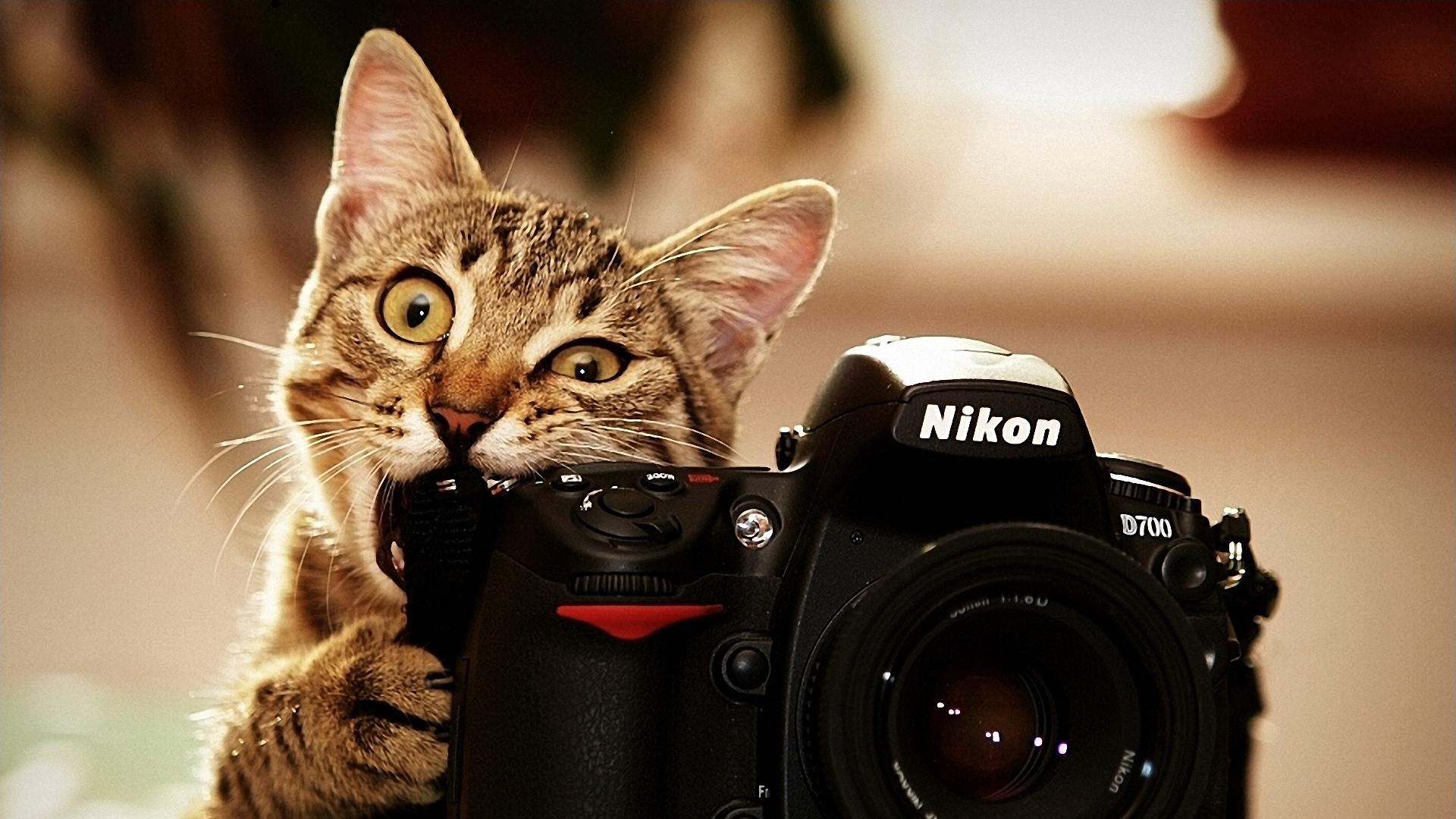 Cat computer background