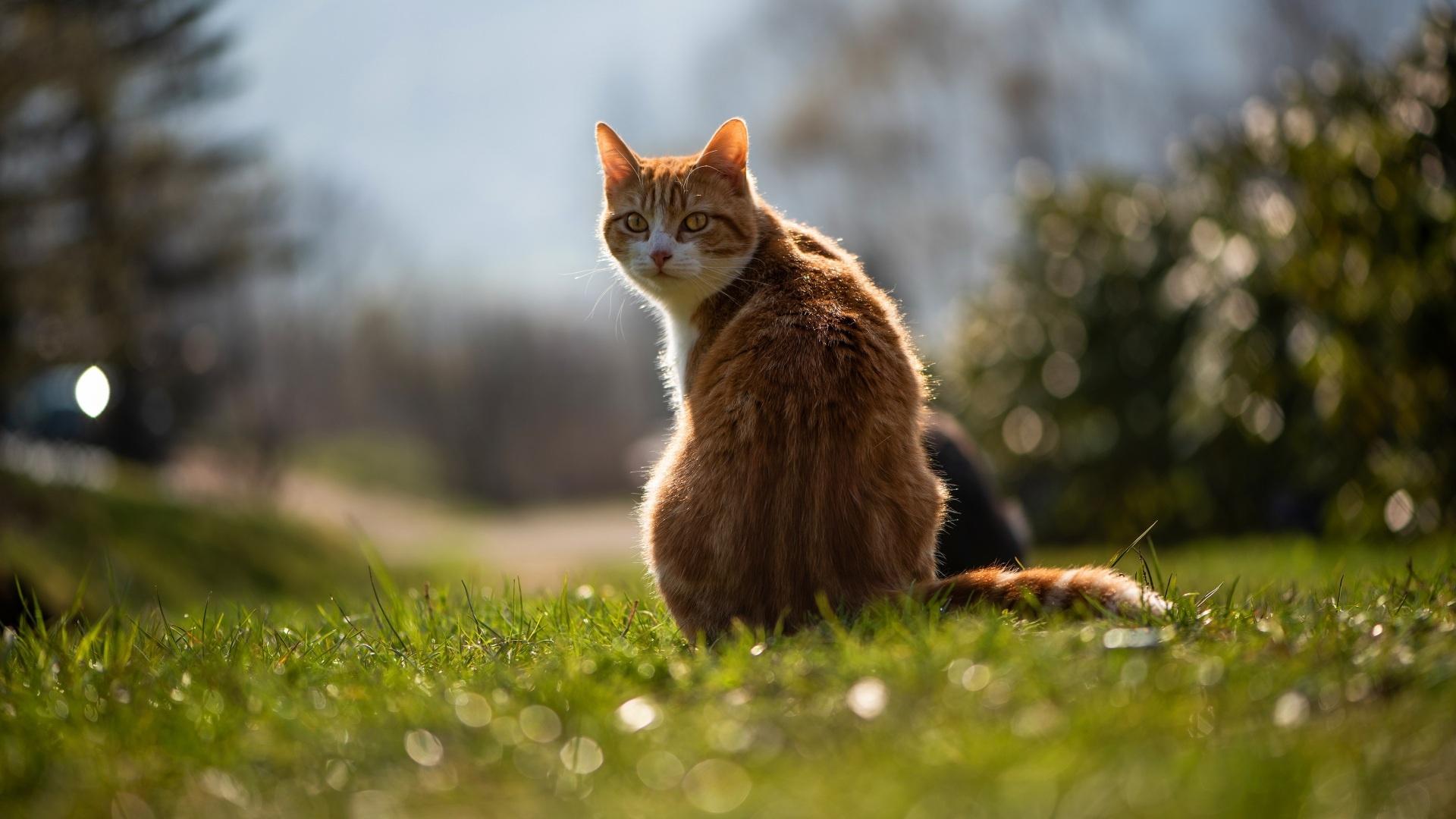 Cat 1080p wallpaper