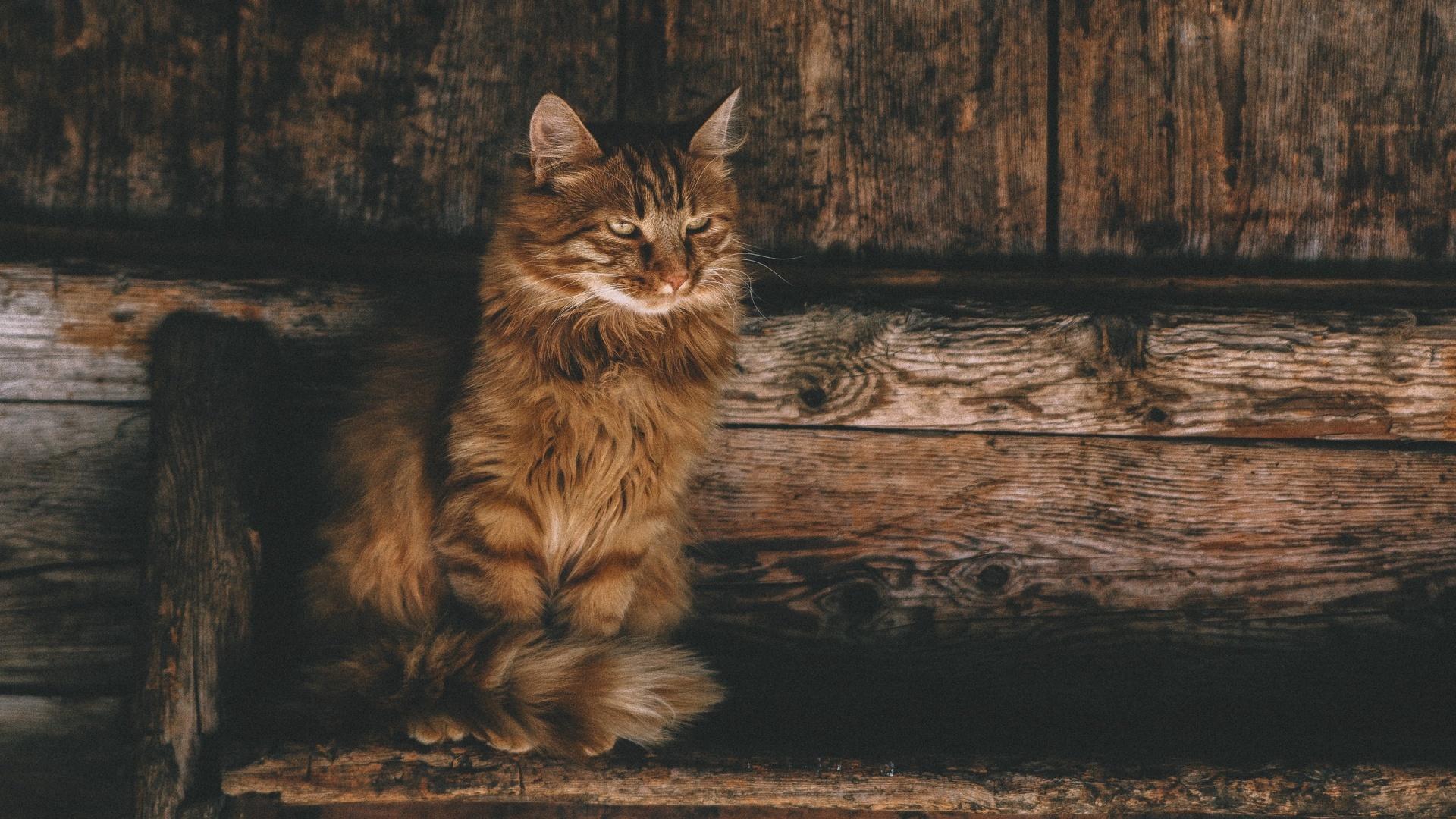 Cat cool wallpaper