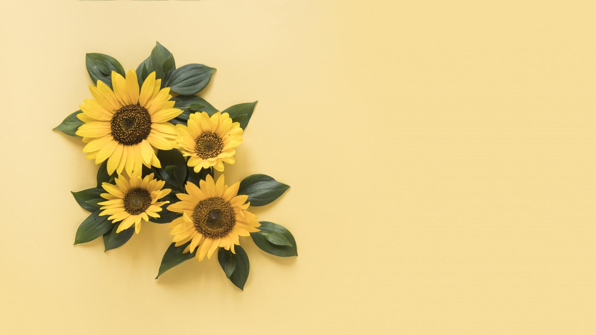 Sunflower pc wallpaper