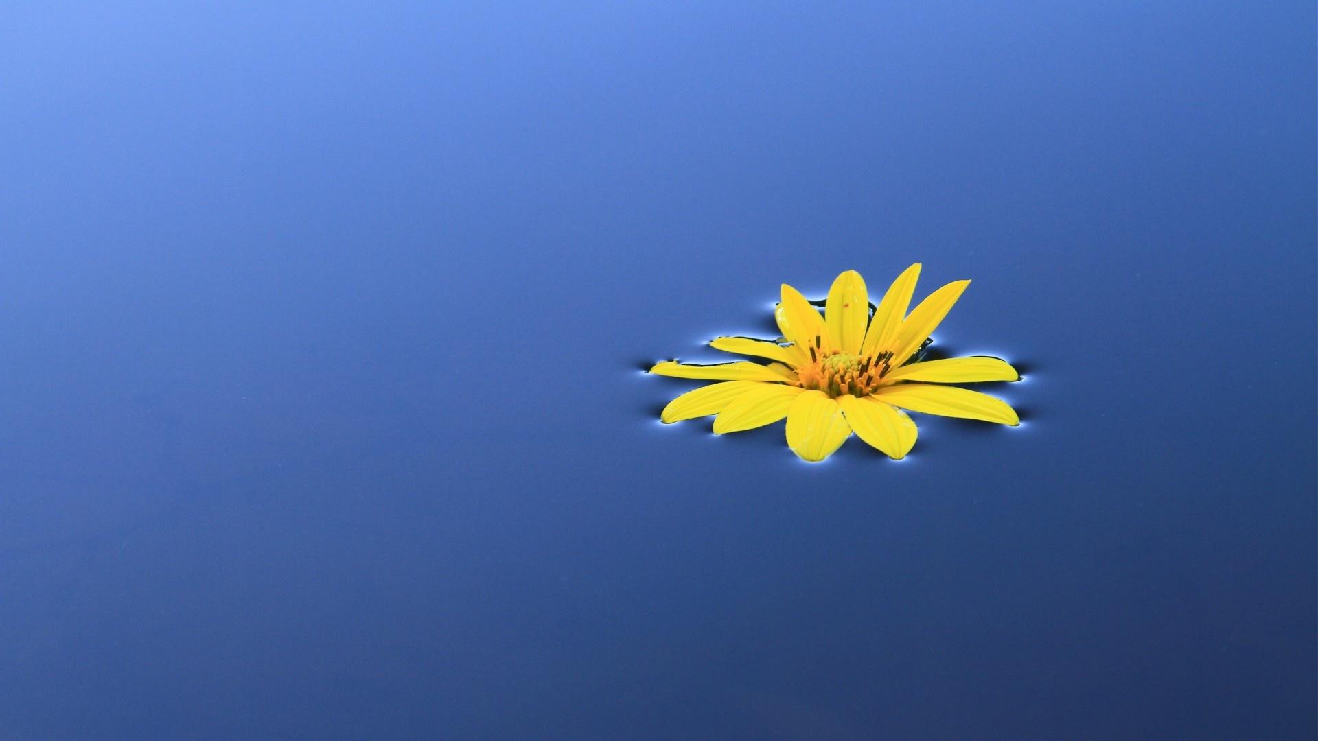 Sunflower best background