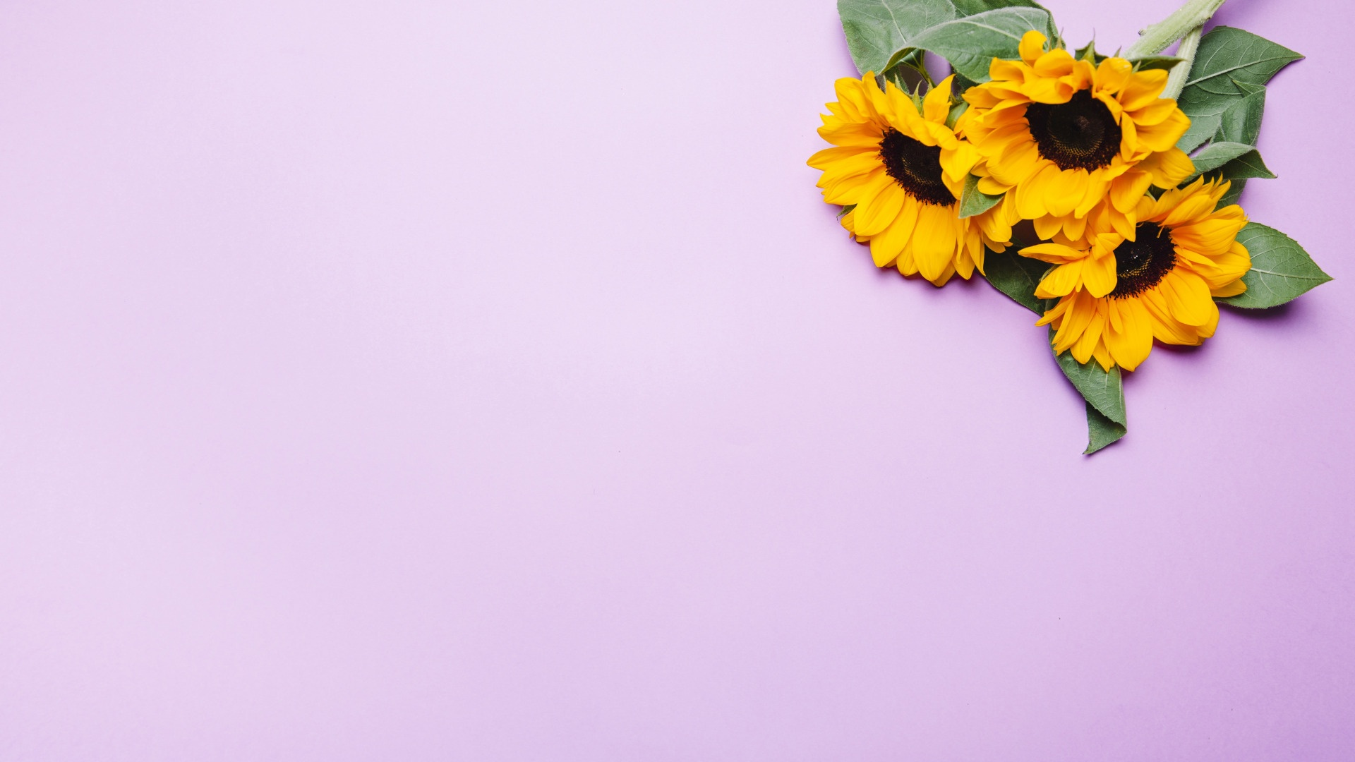 Sunflower best picture