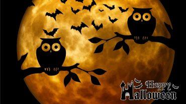 Halloween Owl 1920x1080 wallpaper