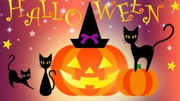Halloween Cat pc wallpaper